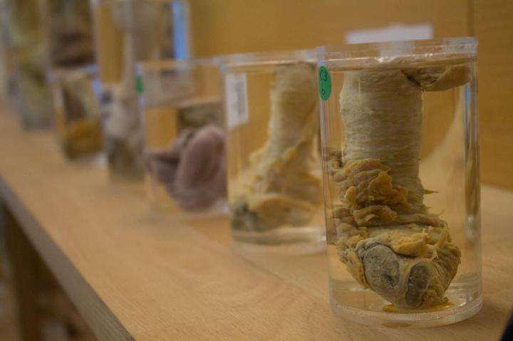 Iceland Phallological Museum 3