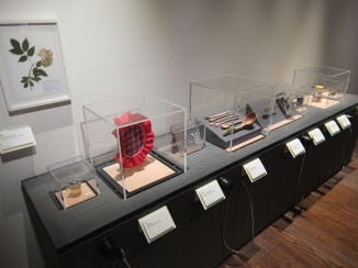 Museum of Modern Nature Display